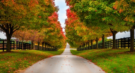 Fall alley